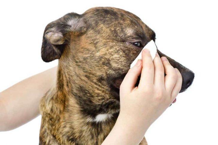 ogen hond schoonmaken