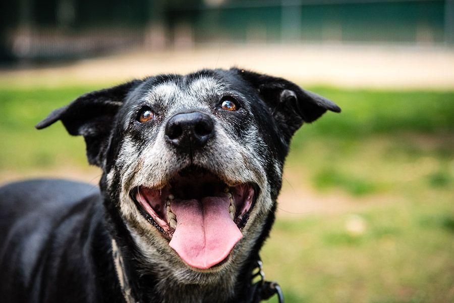 Oude hond: 5 tips voor senior honden