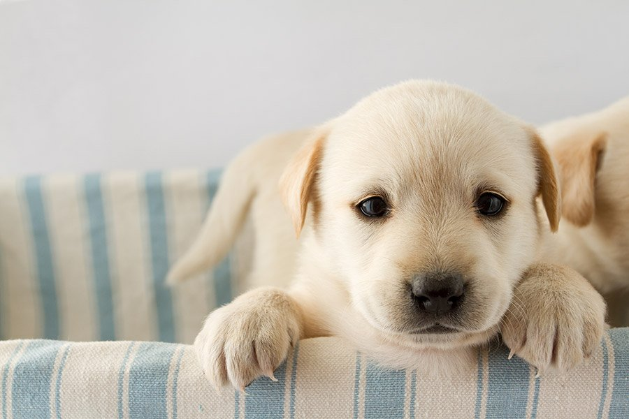 Puppy kopen: hoe koop je veilig een pup? Plus handige checklist!