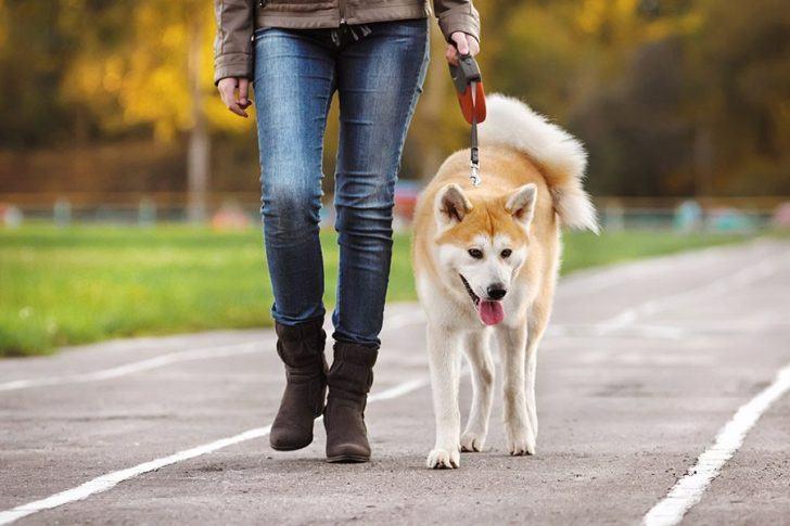 efe036d3978 Rollijnen voor de hond. Door Gelukkige Honden