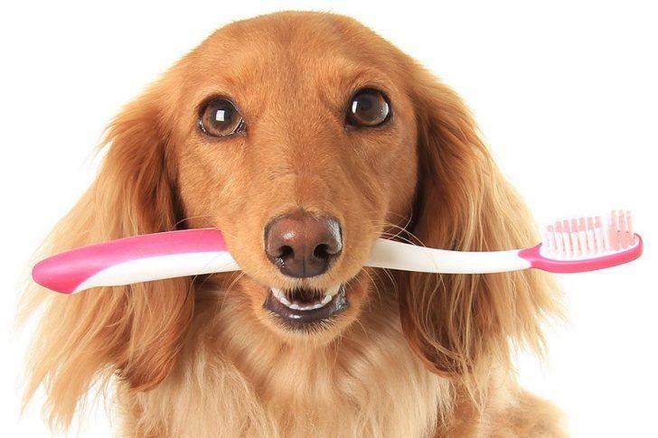"""Afbeeldingsresultaat voor afbeelding gebit hond"""""""