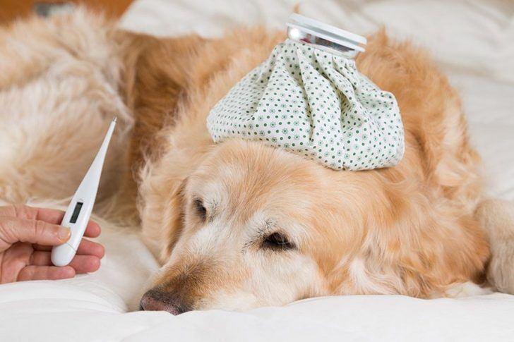 temperatuur opnemen hond