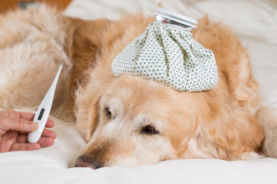 Temperatuur opnemen bij een hond