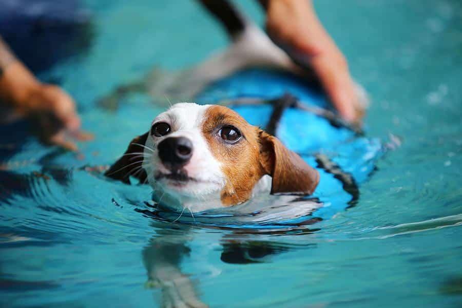 veilig zwemmen met je hond
