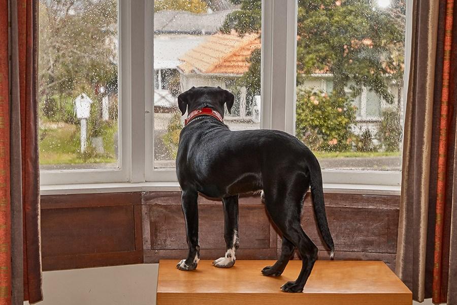 Verlatingsangst bij honden oplossen: wat te doen?