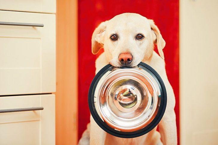 hond eet yoghurt