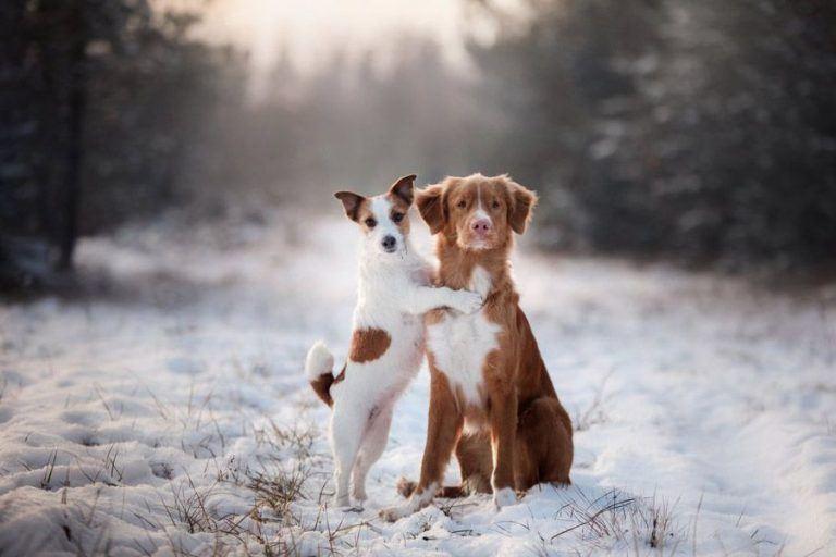 winter tips hond