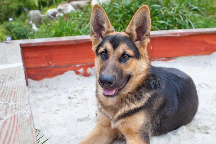 zandbak voor honden