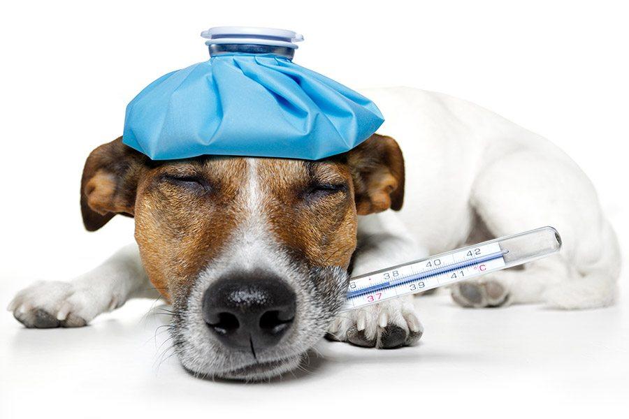 Zieke hond: herken de symptomen